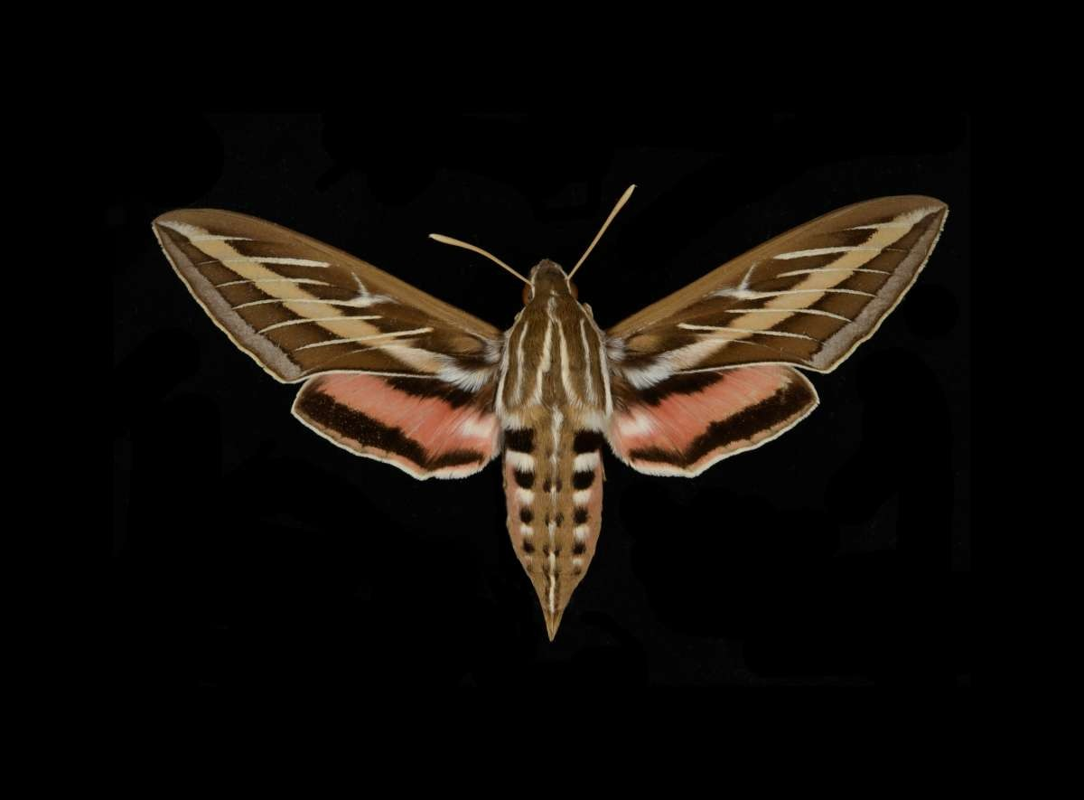 View the Entomology Collections